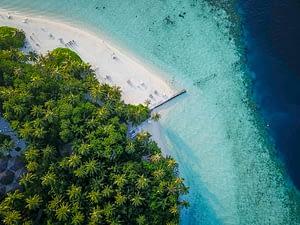 palms island