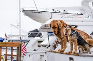 Pet-friendly yachts by SCS Yachting